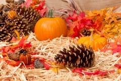 jesień temat szyszkowy sosnowy obraz stock