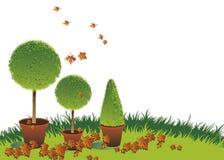 jesień topiary ilustracja wektor