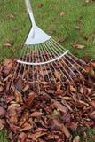 jesień trawy gazonu liść Zdjęcia Stock
