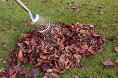 jesień trawy gazonu liść Obraz Stock