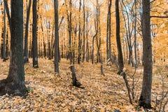Jesień tropi w parku z żółtymi liśćmi fotografia stock