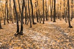 Jesień tropi w parku z żółtymi liśćmi zdjęcia royalty free