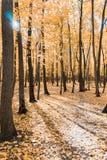 Jesień tropi w parku z żółtymi liśćmi fotografia royalty free