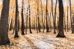 Jesień tropi w parku z żółtymi liśćmi zdjęcie royalty free