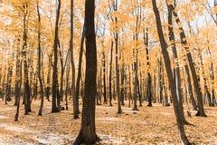 Jesień tropi w parku z żółtymi liśćmi obraz stock