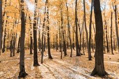 Jesień tropi w parku z żółtymi liśćmi zdjęcia stock