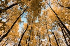 Jesień tropi w parku z żółtymi liśćmi obraz royalty free