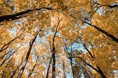 Jesień tropi w parku z żółtymi liśćmi zdjęcie stock