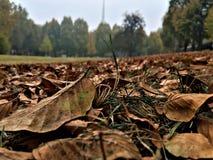 Jesień, trres i liście, obrazy stock