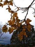 jesień Tuscany zdjęcie royalty free