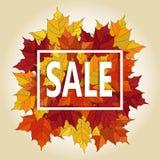 Jesień typograficzna Klonowi jesień liście Obraz Royalty Free