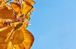 Jesień urlop w pięknym jasnym niebieskim niebie i pączek Obraz Stock