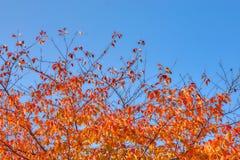 Jesień urlop w pięknym jasnym niebieskim niebie i pączek Zdjęcia Royalty Free