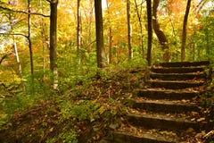 Jesień urlopu pokrywy lasu kroki zdjęcia royalty free