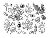 Jesień ustawiająca z liśćmi, jagody, jedlinowi rożki, dokrętki, mushroo ilustracja wektor