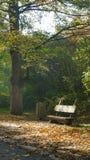 Jesień w «Pszczelnik «drewniana ławka na głównej deptak alei obraz royalty free