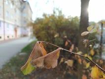 Jesień w Środkowej Europa naturze zdjęcia royalty free