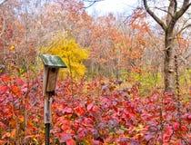 Jesień w Środkowy Zachód Fotografia Stock