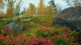 Jesień w Arktycznym okręgu zbiory wideo