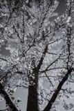 Jesień w czarny i biały zdjęcie royalty free