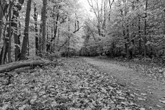 Jesień w czarny i biały Obrazy Stock