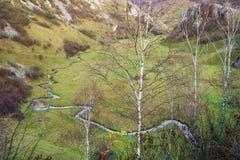 Jesień w Fundatura Ponorului Łąka Ponoru region także dzwoni palma bóg dla swój piękna fotografia royalty free