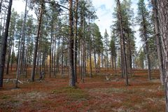 Jesień w Głębokim tajga lesie, Finlandia Fotografia Stock