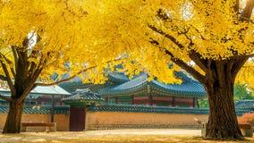Jesień w Gyeongbokgung pałac, Południowy Korea Zdjęcie Royalty Free