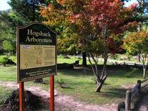 Jesień w Hogsback arboretum, Południowa Afryka Obraz Royalty Free
