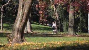 Jesień w jawnym parku zbiory