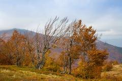 Jesień w Karpackich górach zdjęcia stock
