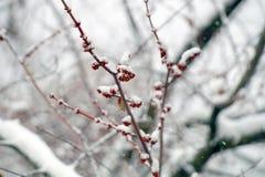 Jesień w Kijów, Listopadu ` s śnieg zdjęcia stock