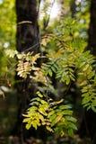 Jesień w lasów liściach drzewach i, dzień obrazy royalty free