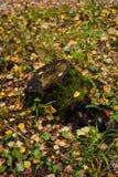 Jesień w lasów liściach i karczu, dzień zdjęcia stock