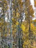 Jesień w Lee Vining w Kalifornia zdjęcia royalty free