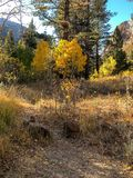 Jesień w Lee Vining w Yosemite fotografia royalty free