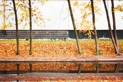 Jesień w mieście Zdjęcie Royalty Free