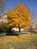 Jesień w mieście Obrazy Royalty Free