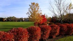 Jesień W miejscowego parku, Żywi kolory zdjęcia stock