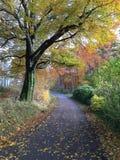 Jesień w naturze obraz stock