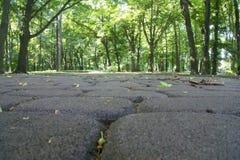 Jesień w parku Mokrzy kolorów żółtych liście na drodze Tło Zdjęcia Stock