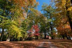 Jesień w parku w sezonie jesiennym obrazy stock