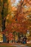 Jesień w parku w sezonie jesiennym obraz royalty free