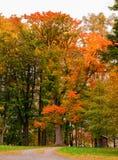 Jesień w parku z koloru żółtego i pomarańcze liśćmi fotografia stock