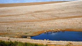 Jesień w Południowa Afryka Zdjęcie Stock