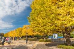 Jesień w Showa pamiątkowym parku, Tachikawa, Japonia obraz stock