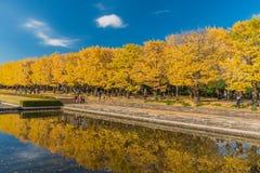 Jesień w Showa pamiątkowym parku, Tachikawa, Japonia obrazy royalty free