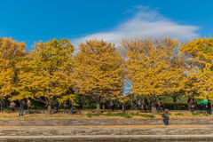 Jesień w Showa pamiątkowym parku, Tachikawa, Japonia zdjęcie royalty free