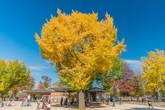 Jesień w Showa pamiątkowym parku, Tachikawa, Japonia fotografia stock