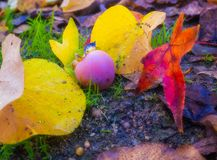 Jesień w swój czystym stanie fotografia royalty free